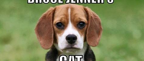 jenners cat